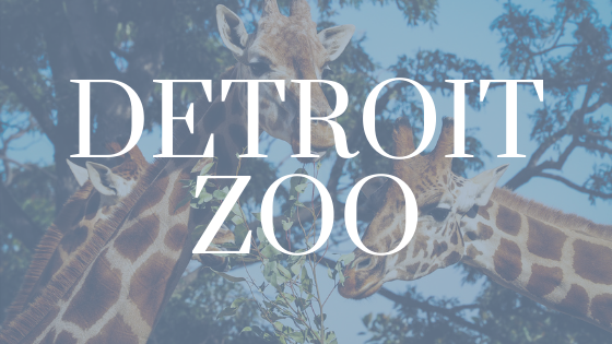 image of two giraffes with Detroit Zoo written over it